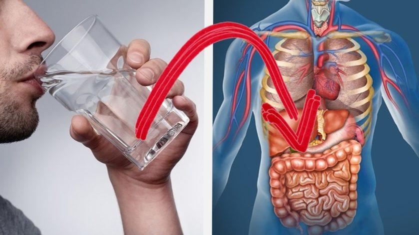 Esto es lo que pasa a tu cuerpo cuando tomas 8 vasos de agua al dia