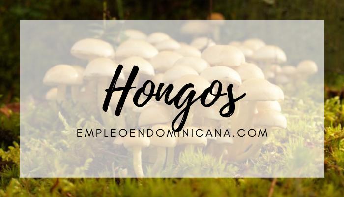 ¡Disfrútalo! Cinco razones para consumir hongos
