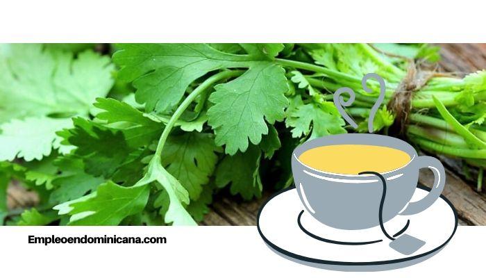 ¡Salud! Conoce las propiedades del té de cilantro